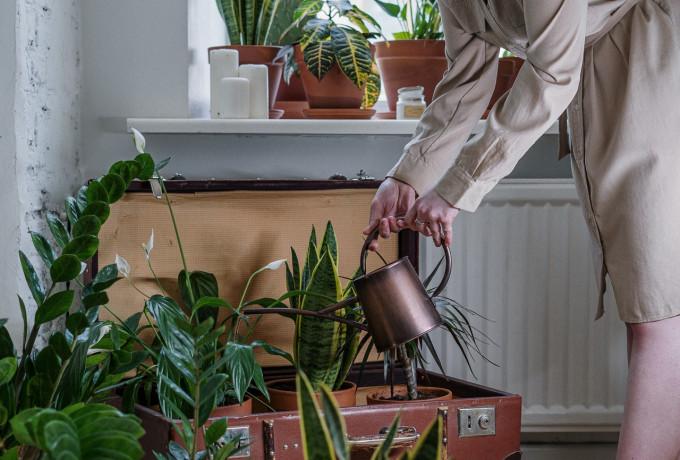 Retired Gardener for Hire
